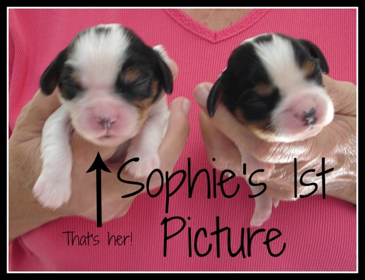 Puppys 1st picture