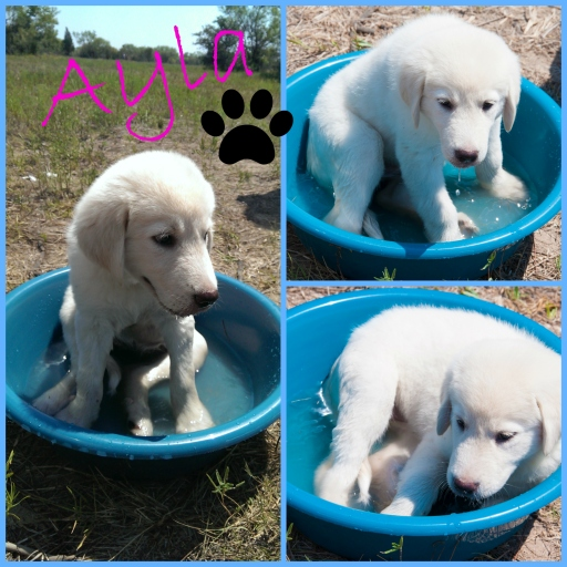 Ayla Puppy picture