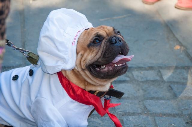 Chef Puppy